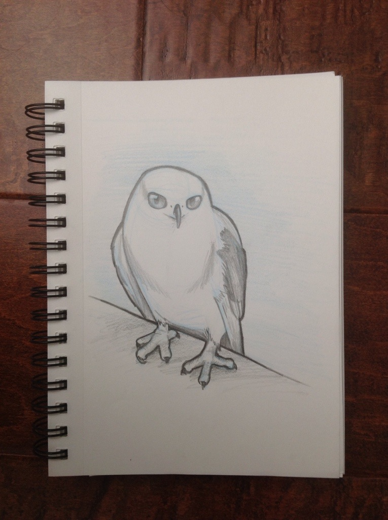 White Tailed Kite Sketch