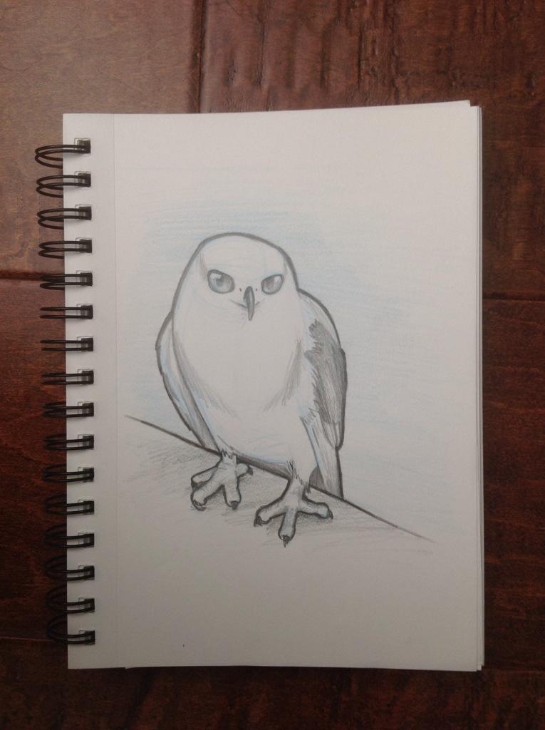 White Tailed Kite Sketch