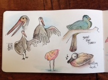 San Diego Safari Park sketches