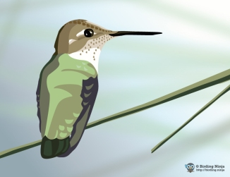 Hummingbird Vector Illustration