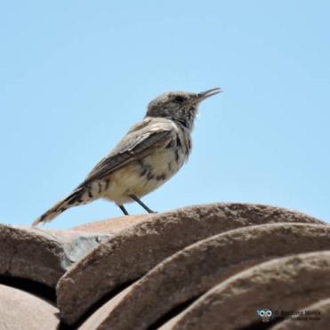 Mystery Bird