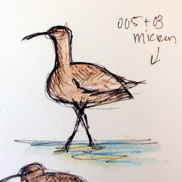 Whimbrel Test Sketch