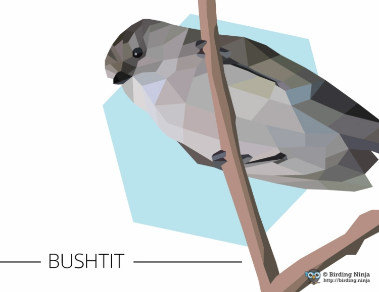 Bushtit geometric vector illustration made in Adobe Illustrator