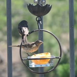 circle feeder