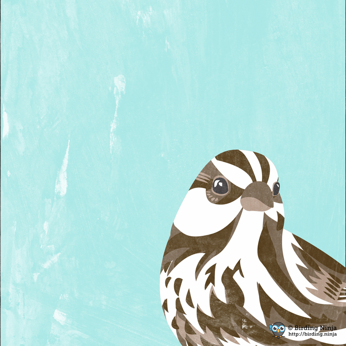 Song Sparrow Vector Illustration