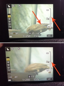 Notice the white lines on the bird when it's in focus (top photo) versus when it's not (bottom photo)