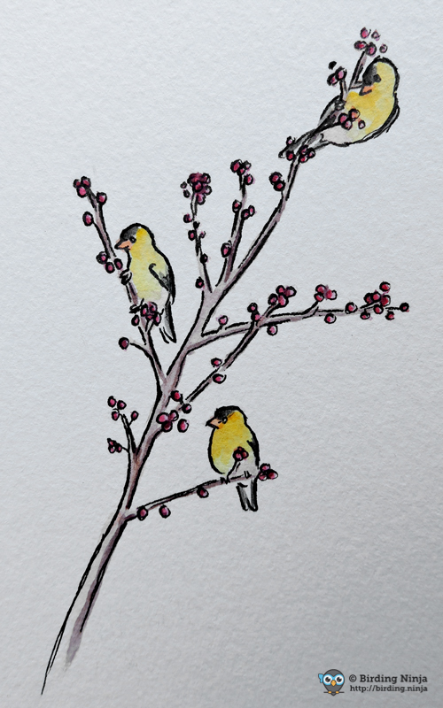 Goldfinch Sketch