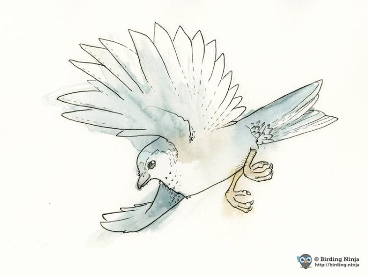 Titmouse Watercolor