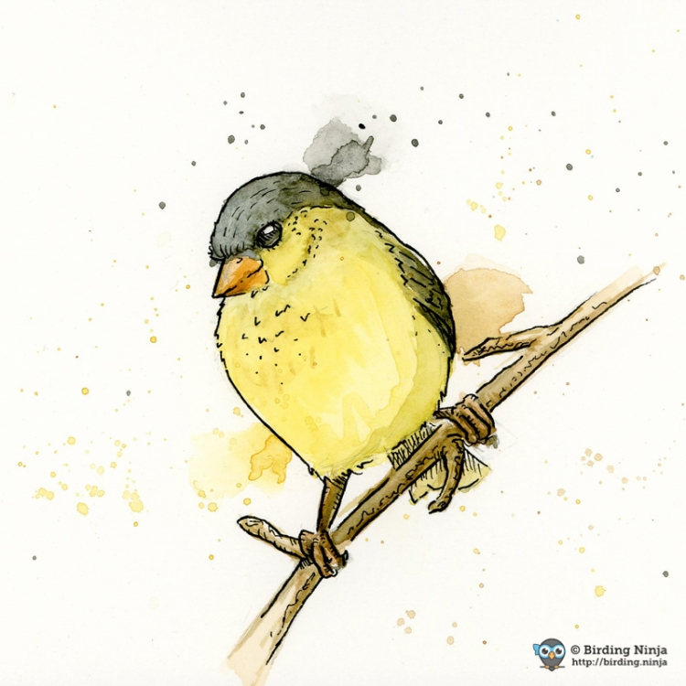 Lesser Goldfinch Watercolor