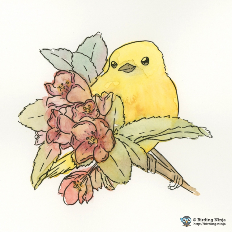 Yellow Warbler Watercolor