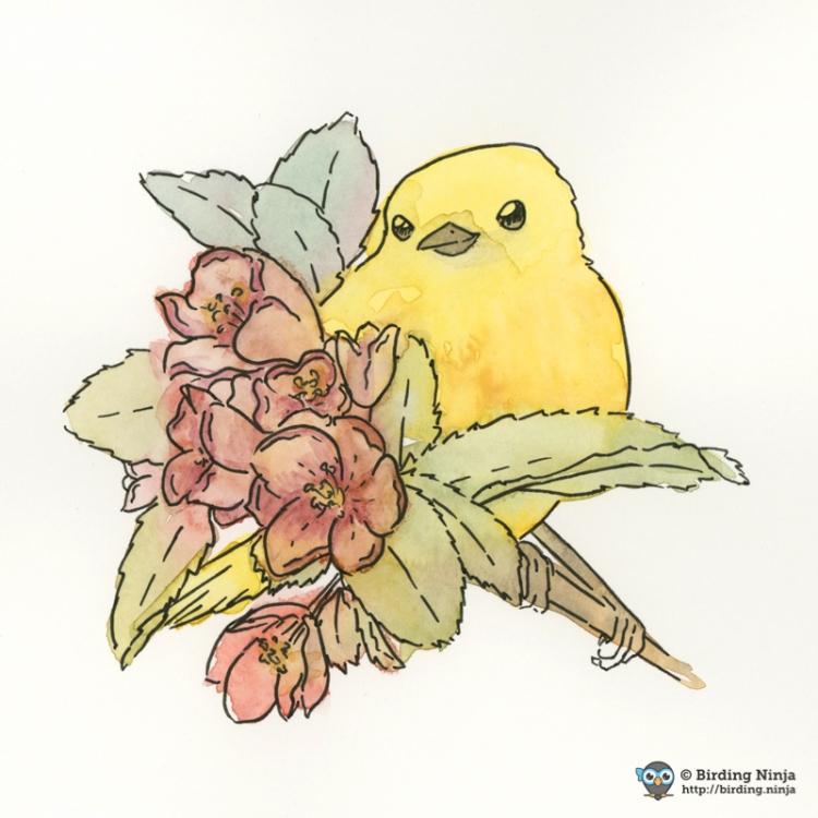 Yellow Warbler Watercolor