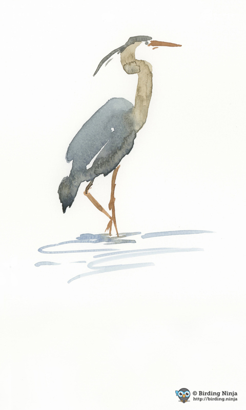 Blue Heron Watercolor