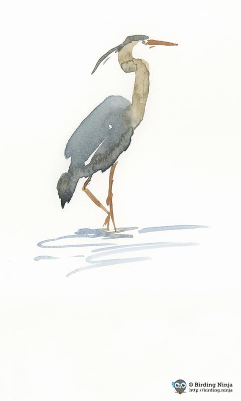 Blue Heron Watercolor