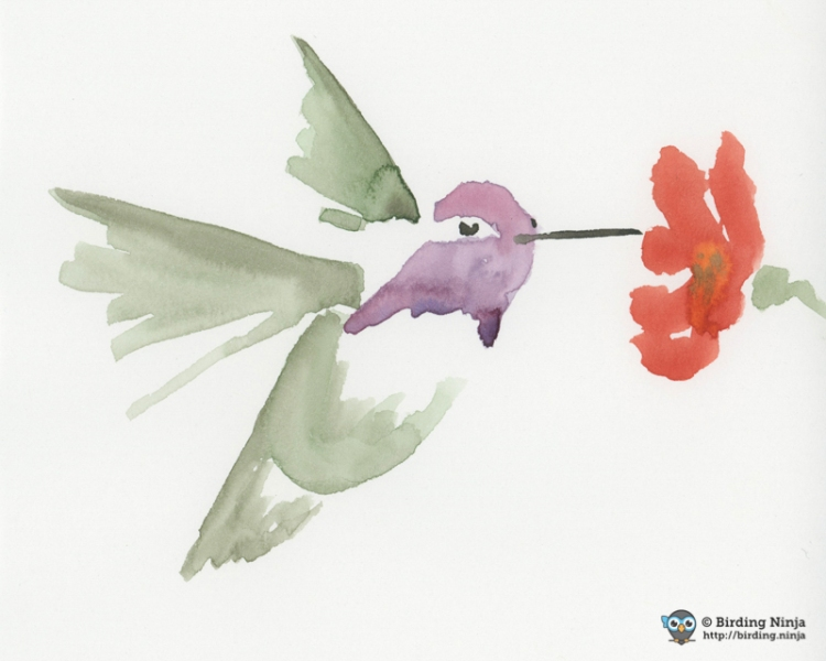 Costa's Hummingbird Watercolor