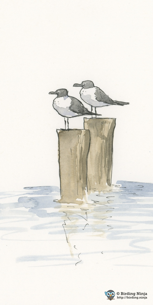 Gulls on the Pier