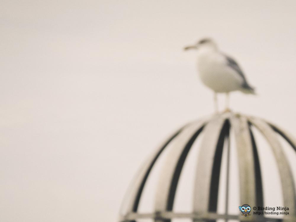 seagull28