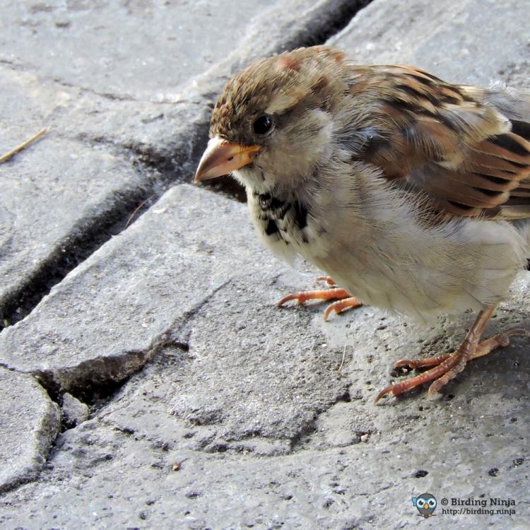 sparrow66